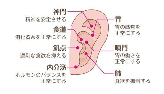 耳つぼ,つぼ,食欲,抑制,食欲を抑える