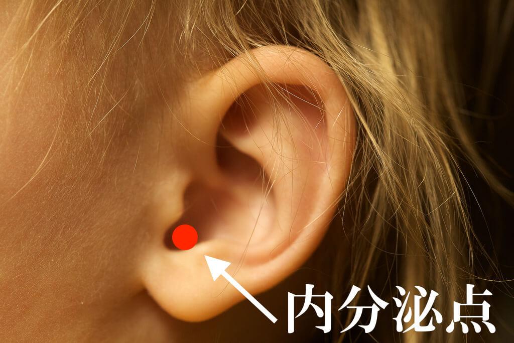 内分泌点,耳つぼ,つぼ,食欲,抑制,食欲を抑える