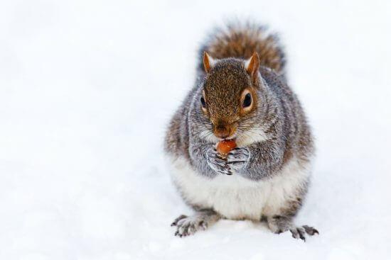冬に基礎代謝が上がる理由