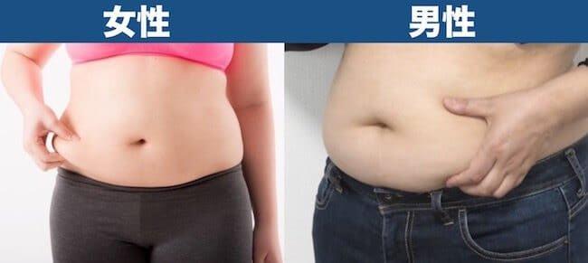 体脂肪率40%見た目_男女比較